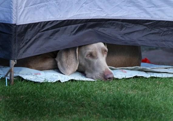 犬と一緒にアウトドア!出かける前の最終確認ポイント