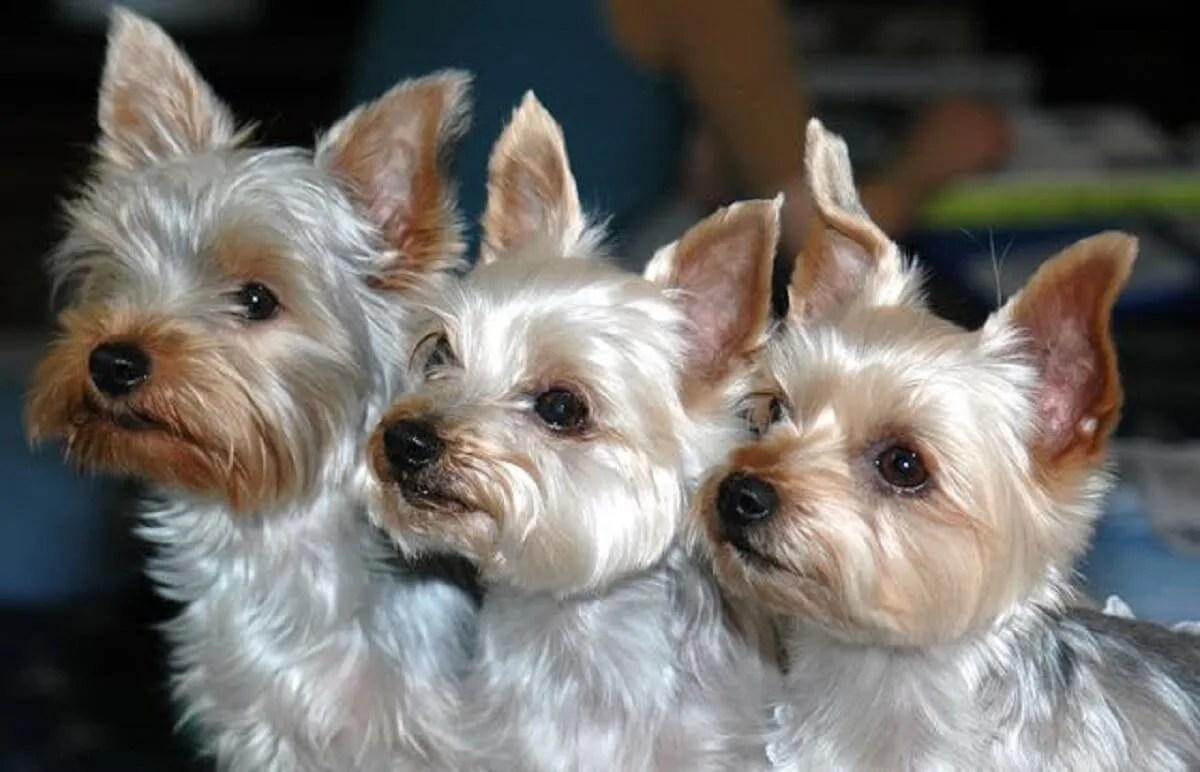 三匹並んでいる犬たち