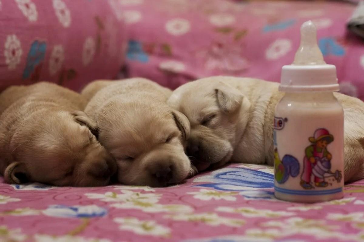 犬 粉ミルク 赤ちゃん