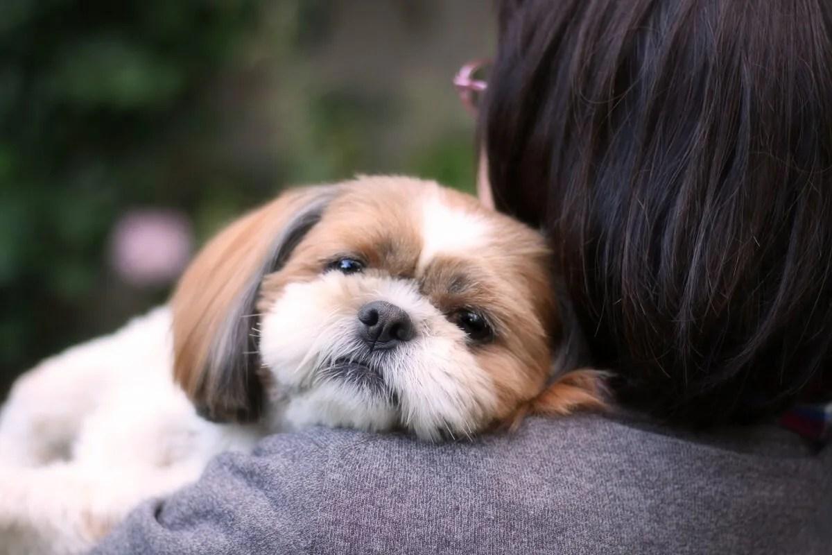 犬 眠い 抱っこ