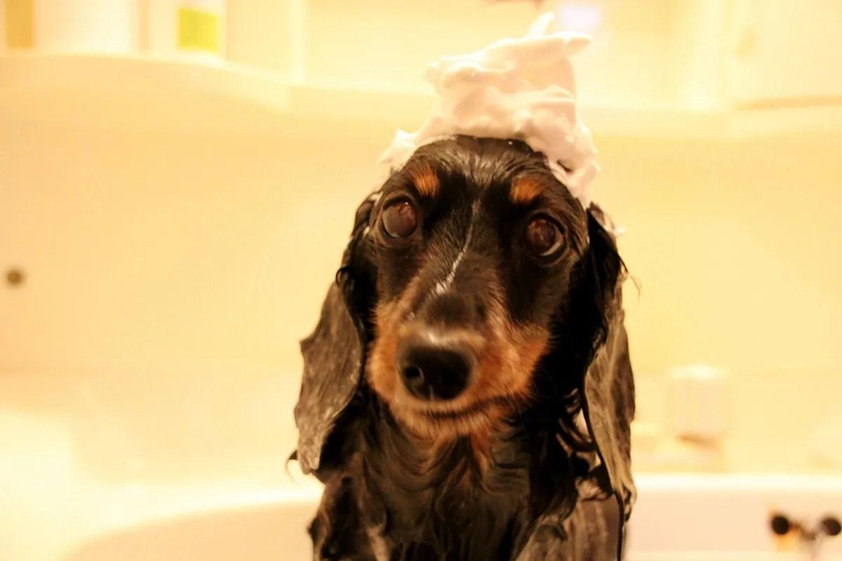 犬 シャンプー 泡