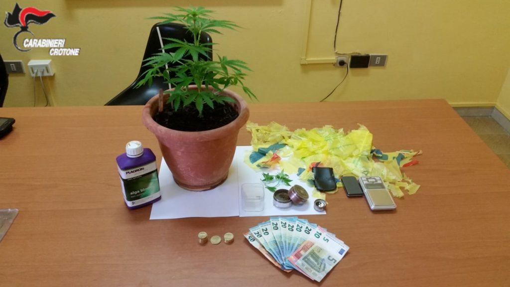Coltivava cannabis, denunciato minorenne