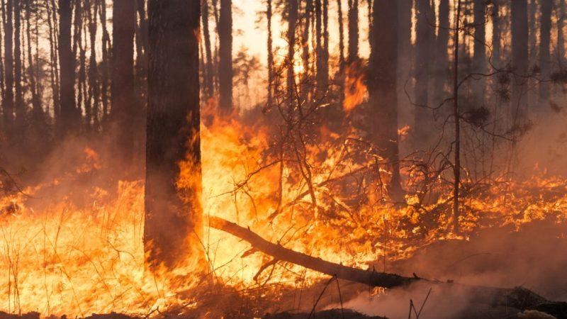 Incendi nel crotonese: parte l'attività di prevenzione