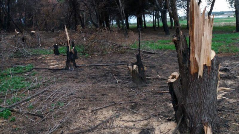 Arrestate 3 persone per furto aggravato di alberi