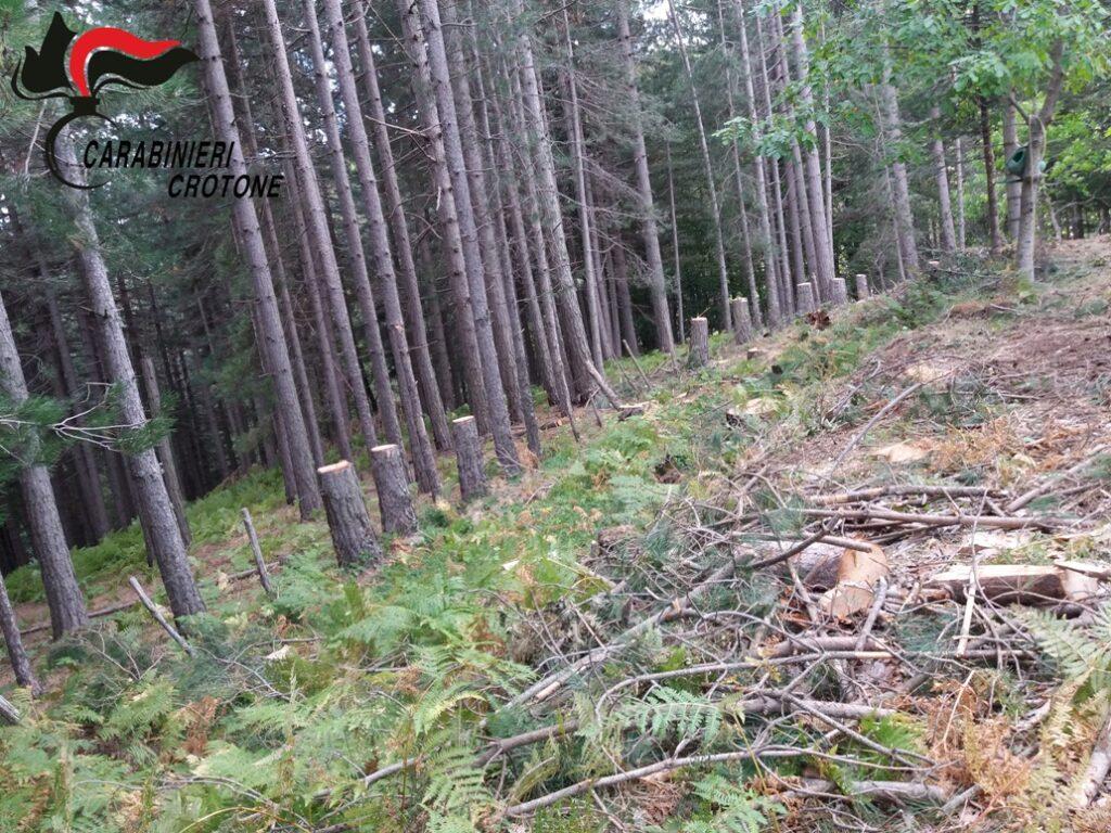 In località Fratta 62 alberi abbattuti illegalmente