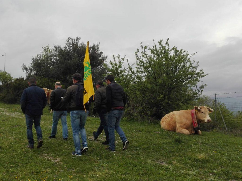 Walk Watch & Clean a Terravecchia