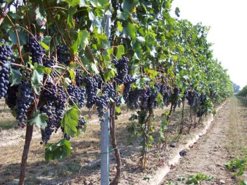 Incontro regionale tra l'assessore Gallo e i rappresentanti del settore vitivinicolo