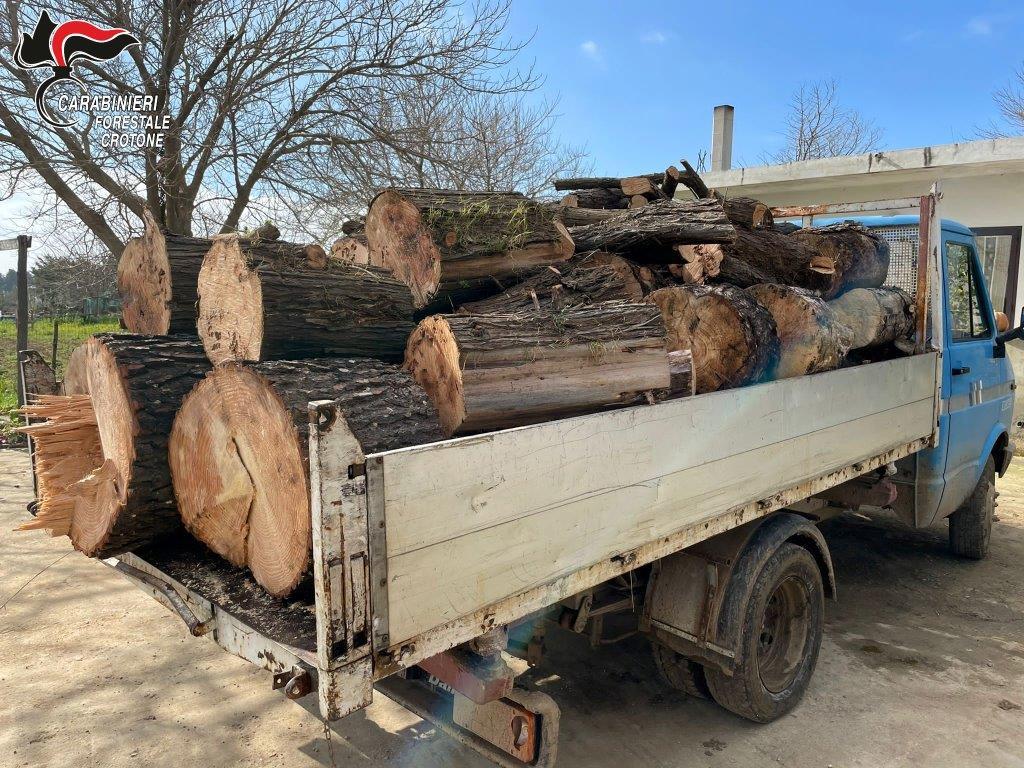 Sorpreso a rubare legna a Sovereto: Arrestato