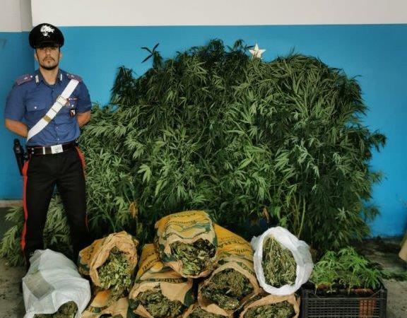Sequestrati 18 kg di marijuana e 32 piante di canapa indiana