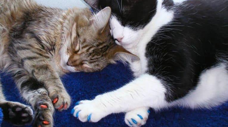 nail caps cat