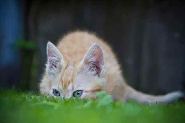 cat-71495_960_720