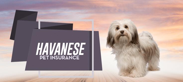 havanese pet insurance