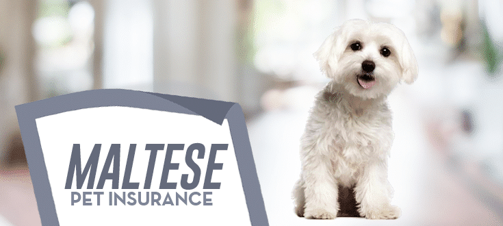 maltese pet insurance