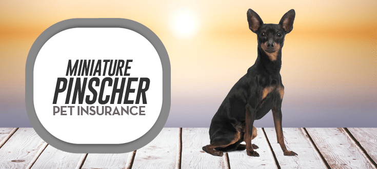 miniature pinscher pet insurance