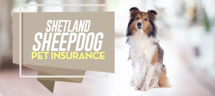 shetland sheepdog pet insurance