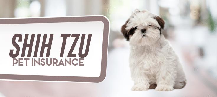 shih tzu pet insurance