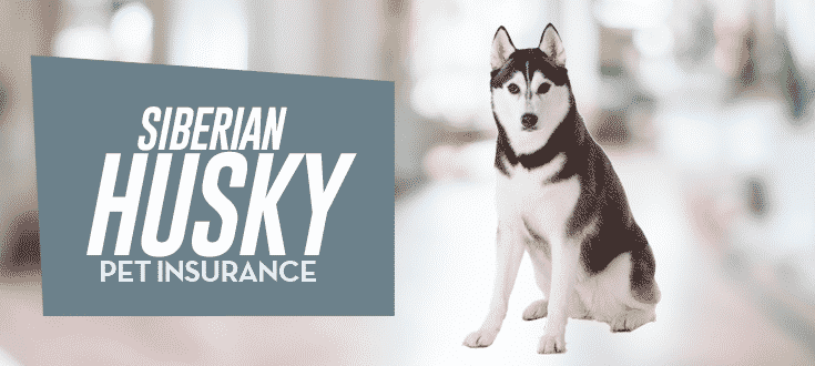siberian husky pet insurance