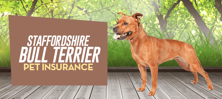 staffordshire bull terrier pet insurance