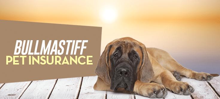 bullmastiff pet insurance