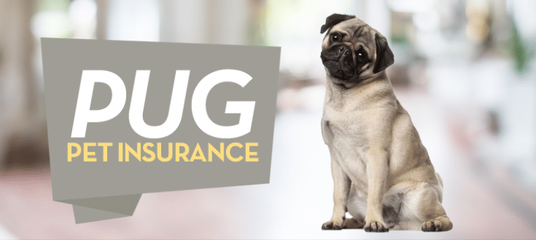 pug pet insurance