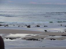 20160408 Philip Island 20