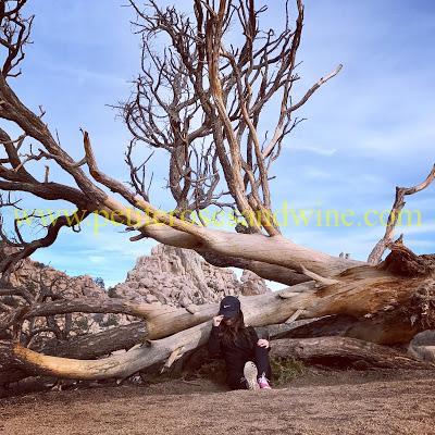 IMG_6808 Joshua Tree National Park OUTFITS TRAVEL