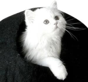 Original Cat Caves By Earthtone Solutions