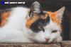 Best Outdoor Cat Bed Reviews