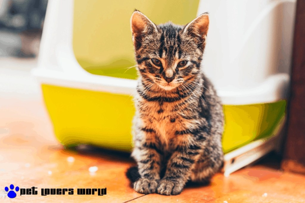 Best Litter Boxes For Cats Reviews