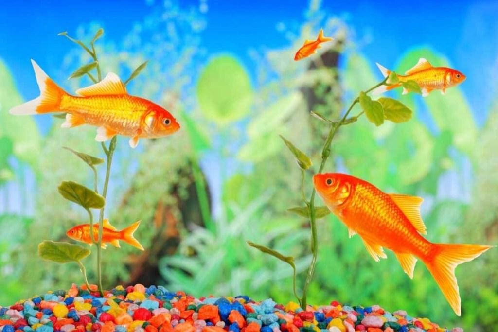 Best Aquarium Heater Reviews Featured Image
