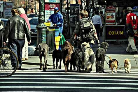 Qualified   experienced pet sitter dog walker pet groomer pet trainer now