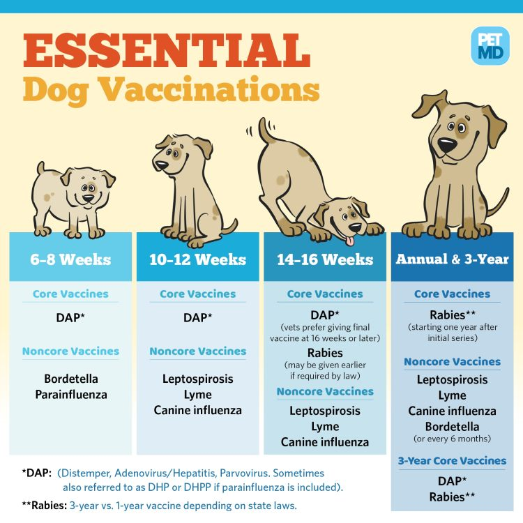 Basic Vaccine Schedule for Dogs | PetMD