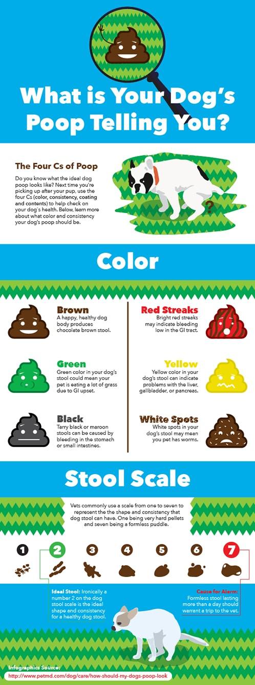 what should my dog's poop look like-infographic