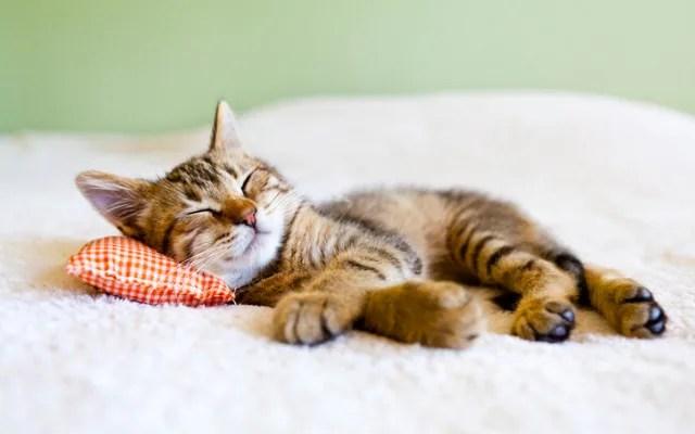 kucing santai, Cara membaca bahasa tubuh kucing