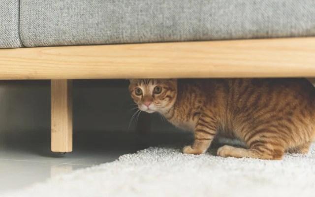 kucing sakit bersembunyi di bawah sofa,