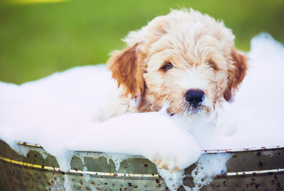 use baking soda for bathing your dog