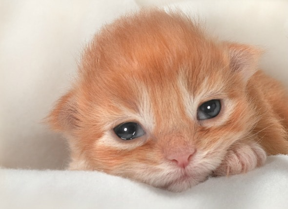 Eye Infection In Newborn Cats