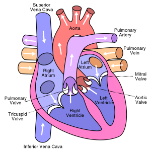 Canine Heart Disease and Nutrition Part 1 | Daily Vet | petMD