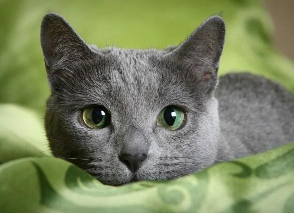 Résultats de recherche d'images pour «cats»