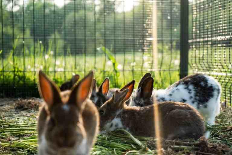 Mehrere Kaninchen in einem Außengehege