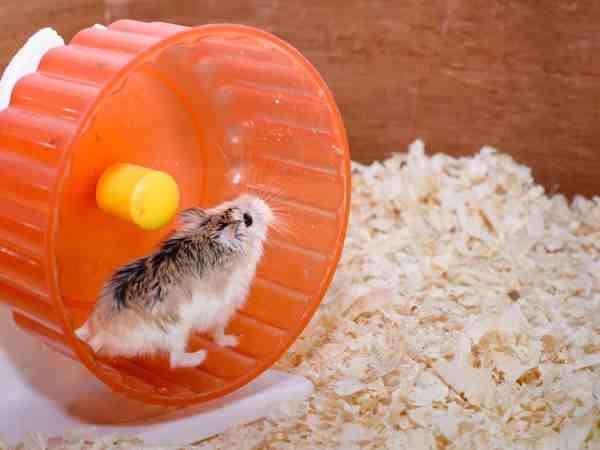 The photographer wanted to convey the life of a hamster