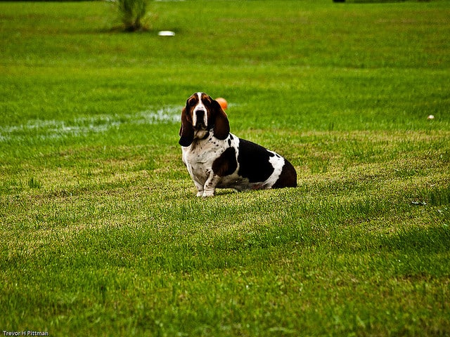 Ideas Dog Backyard Friendly