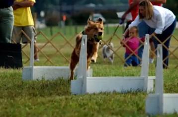 Flyball kutyáknak