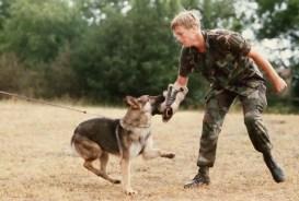 Őrző-védő kutyasport