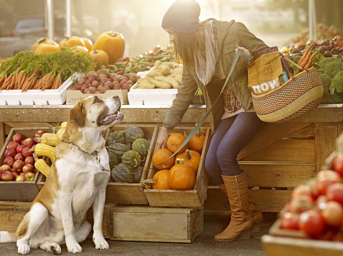10 zöldség és gyümölcs, ami jót tesz a kutyáknak