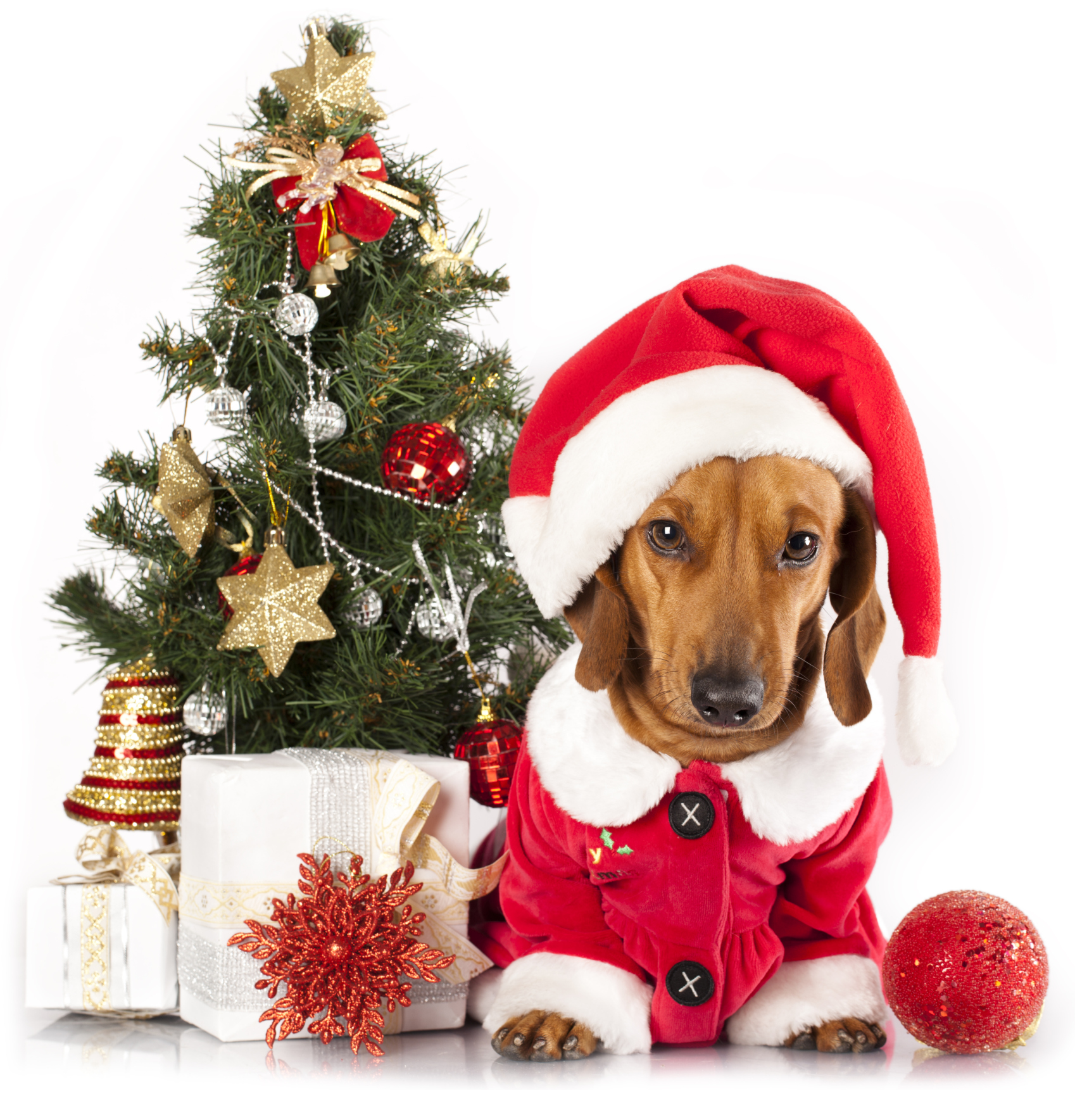 Holiday Pet Poisoning Myths Debunked Pet Poison Helpline