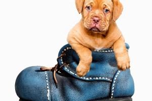 Washington Twp Pet Waste Removal