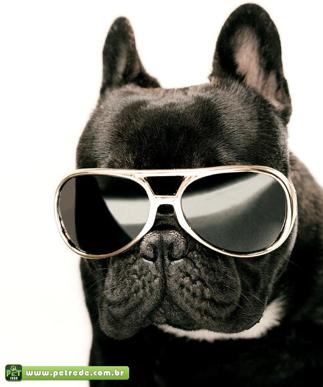 cachorro-pug-oculos-escuro-sol-petrede