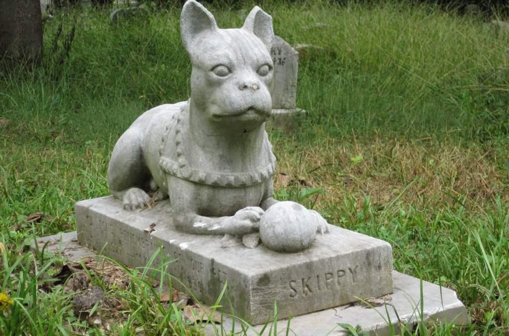 Cresce interesse de alemães por cemitérios para bichos de estimação
