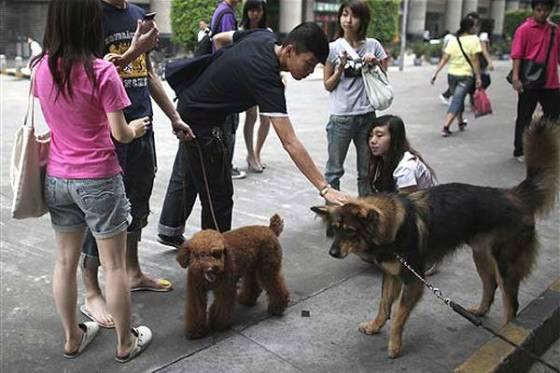 A cidade chinesa que só permite um único cachorro por casa